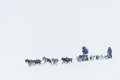 Dogsledding in snowstorm