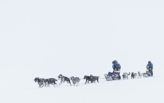 Dogsledding in snowstorm